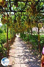 Zakros and Kato Zakros - Crete - Greece  73 - Photo GreeceGuide.co.uk