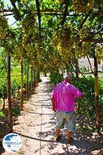 Zakros and Kato Zakros - Crete - Greece  74 - Photo GreeceGuide.co.uk