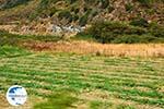 Giannitsi Euboea | Greece | Photo 36 - Photo GreeceGuide.co.uk